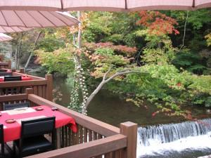 秋の色づき、風を感じながら≪川どこの紅葉ランチ≫はいかが?