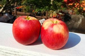 ★ 南会津町産採れたてリンゴ ★