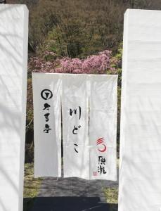 初日の水辺のダイニング川どこは晴天&枝垂れ桜